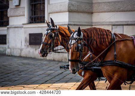 Two Brown Harnessed Horses In Vienna, Close-up Photo Of City Horses In Austria