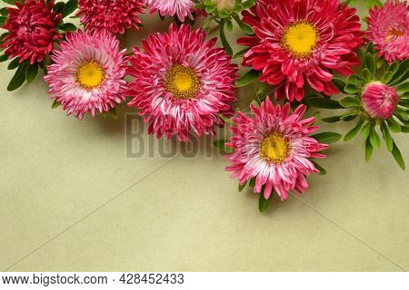 A Beautiful Composition For Greeting Cards Made Of Flowers-asters Or Daisies On Pale Old Green Kraft