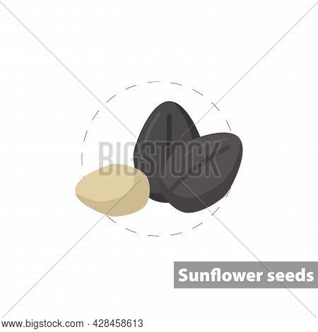Ripe Sunflower Seed Clipart. Sunflower Seed Simple Vector Clipart. Sunflower Seed Isolated Clipart.