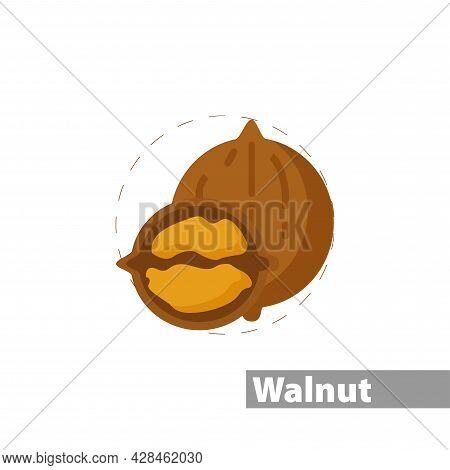 Walnut Clipart. Walnut Simple Vector Clipart. Walnut Isolated Clipart.
