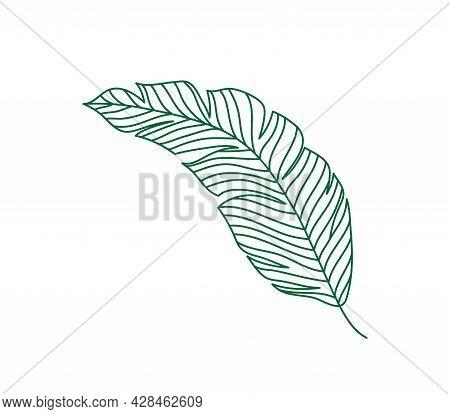 Monoline Green Vector Drawing Exotic Tropical Leaf Monstera Plant. Printable Decorative Houseplant C