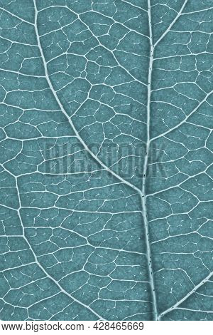 Leaf Of Fruit Tree Close-up. Light Gray Tinted Mosaic Pattern Of A Net Of Veins And Plant Cells. Abs