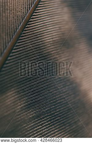 Bird Feather Close-up. Dark Brown Spotted Natural Wallpaper With A Rhythmic Pattern. Tinted Vertical