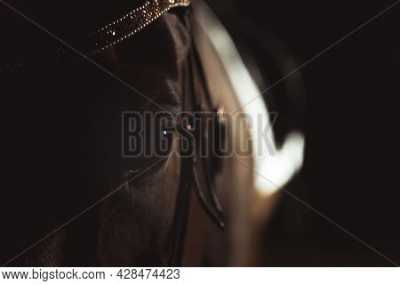 Seal Brown Horse With Black Eyes Wearing Beautiful Jewelry On Head Standing In The Stable. Horsehead