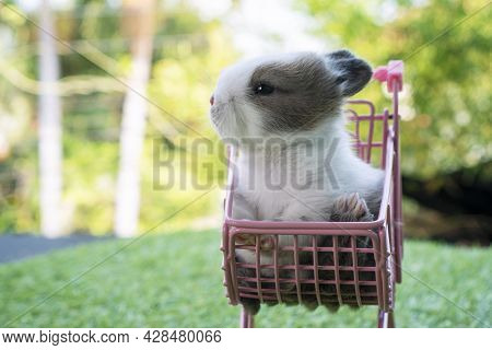 Easter Animal And Shopping Concept. New Born Baby Furry Rabbits Bunny On The Little Pink Shopping Ca