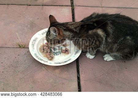 A Skinny Cat Eating Pet Food From A Plate Placed On The Ground
