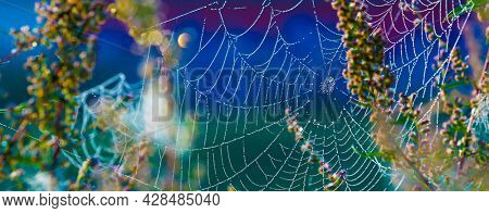 Cobwebs on the grass with dew drops, Spider Web in forest