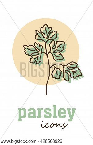 Parsley Vector Icon. Vegetable Green Leaves. Greenery. Culinary Herb Spice For Cooking, Medical, Gar