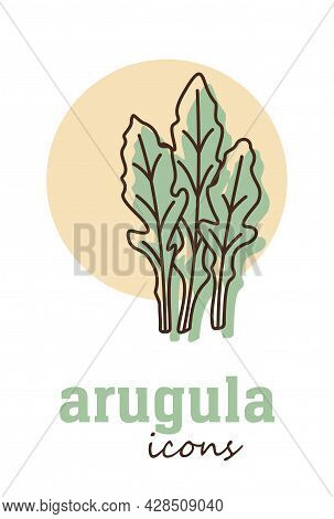 Arugula Vector Icon. Vegetable Green Leaves. Greenery. Culinary Herb Spice For Cooking, Medical, Gar