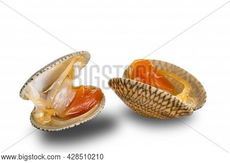 View Of Opened Clams, Baby Clams, Carpet Clams, Short Neck Clams On White Background With Clipping P