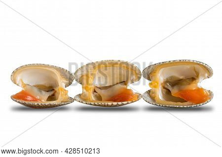 Row Of Opened Clams, Baby Clams, Carpet Clams, Short Neck Clams On White Background With Clipping Pa