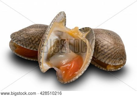 Closeup View Of Opened And Closed Clams, Carpet Clams, Short Neck Clams, Baby Clams On White Backgro