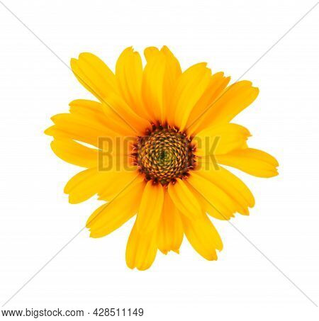 Calendula Flowers Isolated On White Background. Marigold Flower. Medicinal Herbal Plant. Top View.