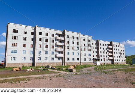 Rural Landscape With Cows Resting In The Courtyard Of Panel Residential Buildings In Siberia. The Re
