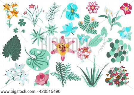 Flower And Plants Isolated Set. Lilies, Green Leaves, Aloe, Blooming Wildflowers. Flowering Garden A