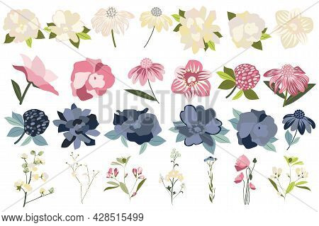 Flower And Plants Isolated Set. Echinacea, Roses, Blooming Wildflowers And Other. Flowering Garden A