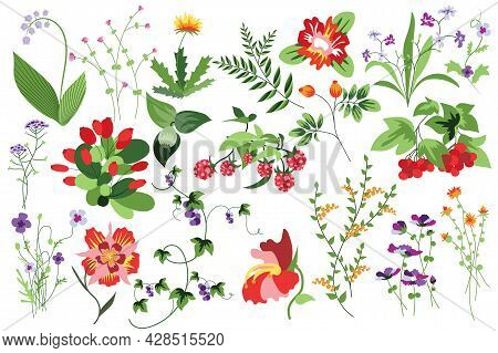 Flower And Plants Isolated Set. Raspberry, Rowan And Other Berries. Flowering Garden And Blooming Wi