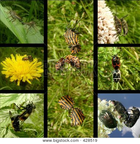 strategies of coupling in insects poster