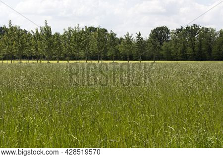 View Of Typical Field In Lombardia, North Of Italy