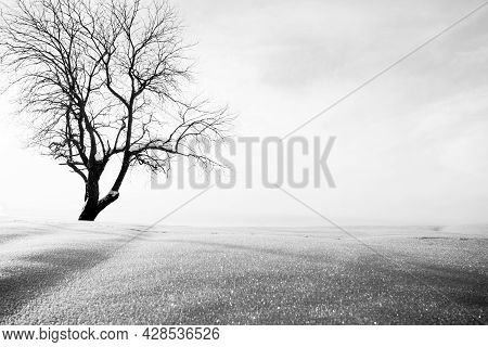 Winter Landscape, Isolated Tree And Snow. Minimal Scenery. Digitally Altered.