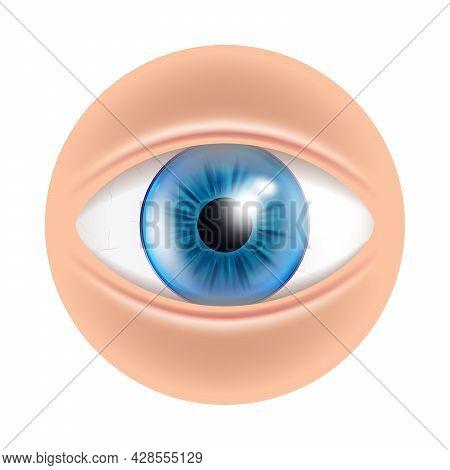 Eye Human Facial Organ With Contact Lenses Vector. Eye Blue Optical Medical Accessory For Correct Vi