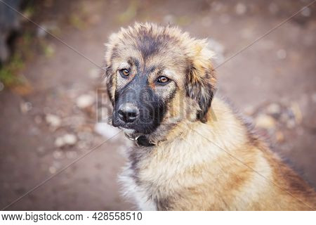 Dog With Sad Eyes In The Shelter For Adoption