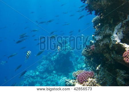 coral colony on a reef