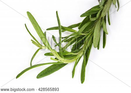 Single Twig Of The Fresh Rosemary On A White Background, Fragment Close-up