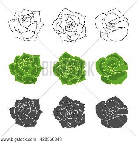 Succulent Echeveria Vector Set - Lovely Rose, Greenovia, Shaviana. Hand Drawn Desert Flower Illustra