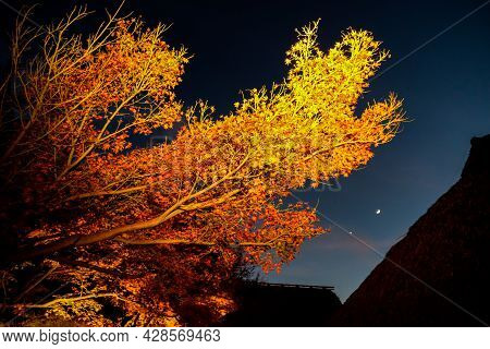 Spot Light To Colorful Maple Branch Twilight Scene Of Autumn Landscape In The Park ,over Roof Japane