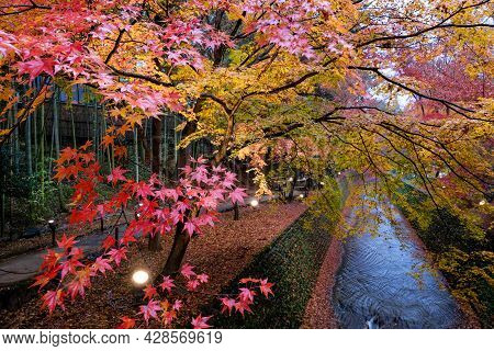 Maple Trees In Colorful Along Green Canal Stone , Maple Leaves Falling Injapanese Garden, Kitano Te