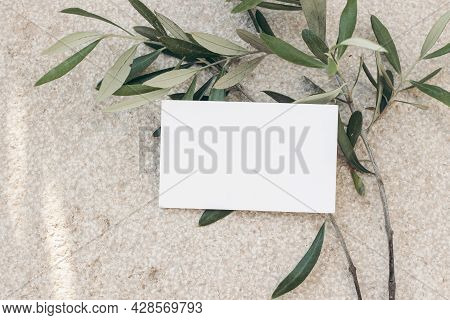 Summer Stationery Mockup Scene, . Blank Business Card On Concrete Floor. Textured Background With Ol