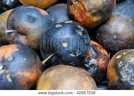 Heap Of Rotting Apples