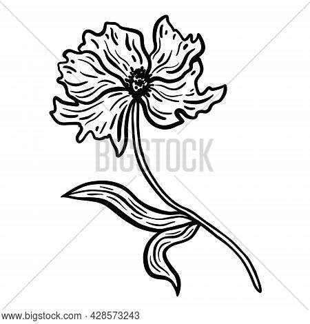 Flower With Stem And Leaves. Hand Drawn Vector Illustration. Monochrome Black And White Ink Sketch.