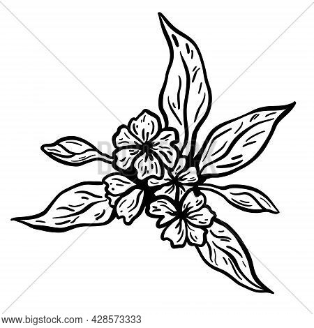 Flower And Leaves Branch. Hand Drawn Vector Illustration. Monochrome Black And White Ink Sketch. Lin