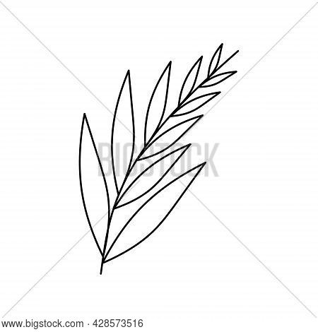 Vector Abstract Leaf Illustration Using For Logo, Wedding, Stories, Posters. Minimal Modern Leaves A