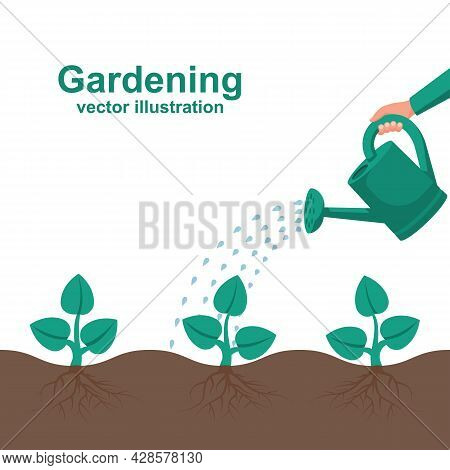 Watering Can Hold In Hand. Watering, Fertilizer Young Sapling Falling Drop Of Water Isolated. Plant