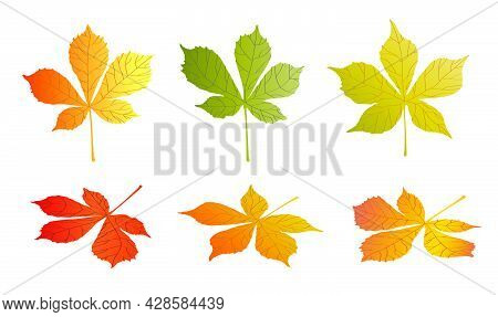 Doodle Chestnut Tree Leaves Isolated On White Background. Autumn Fallen Leaves Of Chestnut Tree. Har