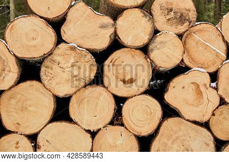 Textured Wooden Material Wall. Round Timber Stack Background. Pine Lumber-camp. Close-up. Banner. Ma