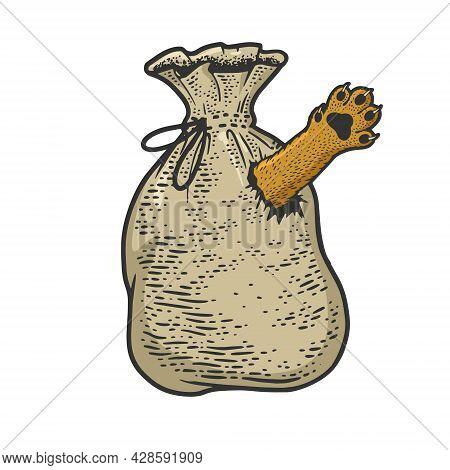 Cat In Sack Bag Poke Color Sketch Engraving Vector Illustration. T-shirt Apparel Print Design. Scrat