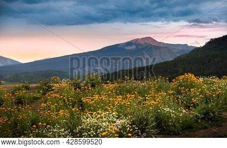 Wildflowers meadow in Colorado near Crested Butte town