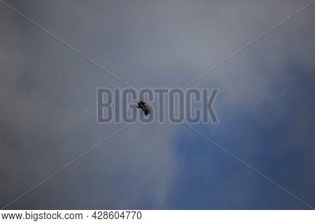Vulture Flight In Montsec, Lleida, Spain