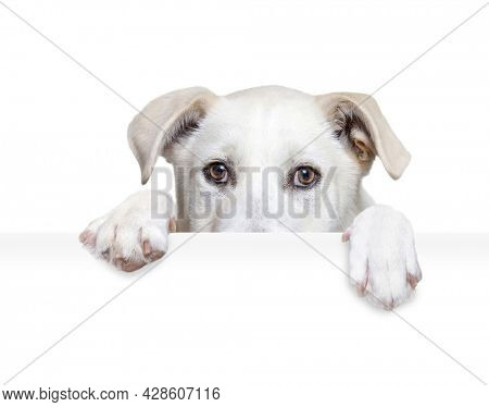 studio shot of a cute dog on an isolated background holding a blank white sign