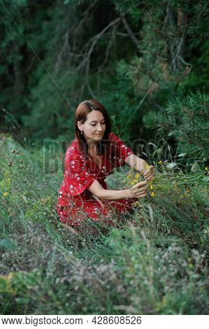 Identification, Collection And Preparation Of Medicinal Plants. Cultivation And Processing Of Tradit