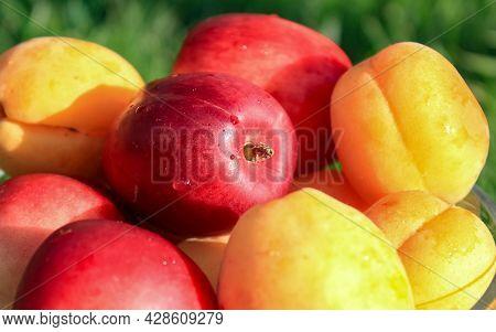 Fresh Fruits Nectarines And Apricots Close-up. A Selective Shot.