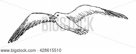 Grunge Vector Sketch Of Flying Seagull, Isolated On White Background. Rough Linear Freehand Drawing