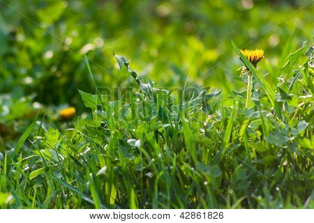 Grass Row