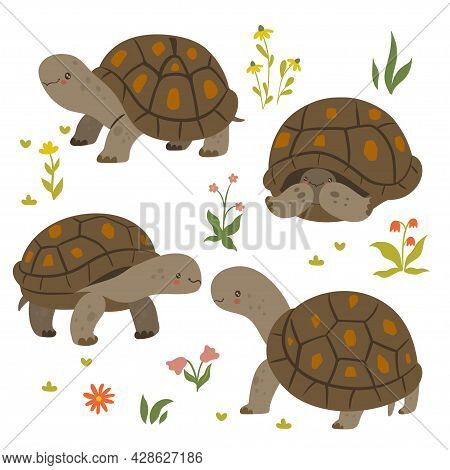 Set Of Cute Turtles Isolated On A White Background. Vector Image.