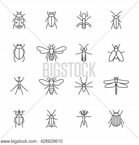 Set Of Icons Of Insects, Vector Illustration