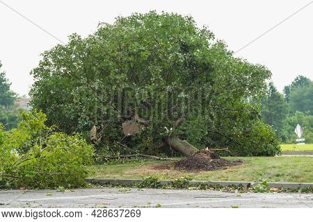 Felled Trees After The Storm Green Nature Wood Fall Outdoor Damage Summer